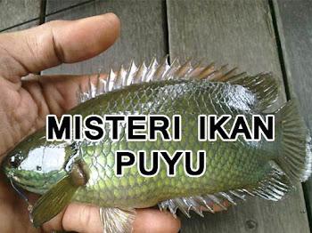 Misteri Ikan Puyu