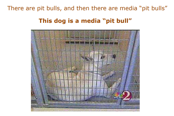 pit bull bias in media The pit bull placebo: the media, myths and politics of canine aggression   safety and sheds light on current media bias involved in the reporting of dog  attacks.