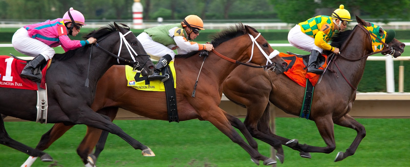 Horse Racing in Australia - Horse Racing Today: Top Qualities Of a