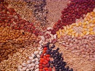 A magia das sementes