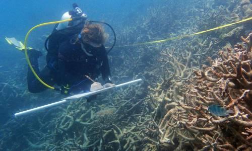 arrecife-coral-japon