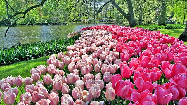 keukenhof parque holandês, tulipas, canal, árvores, vegetação