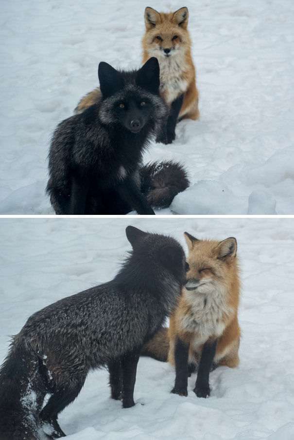 40 Heartwarming Pictures Of Animals - These Two Were Born In My Yard Last Spring, They Still Come Home To Visit From Time To Time