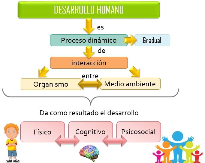 Esquema Desarrollo Humano   Esquemas, diagramas, gráficos y mapas ...