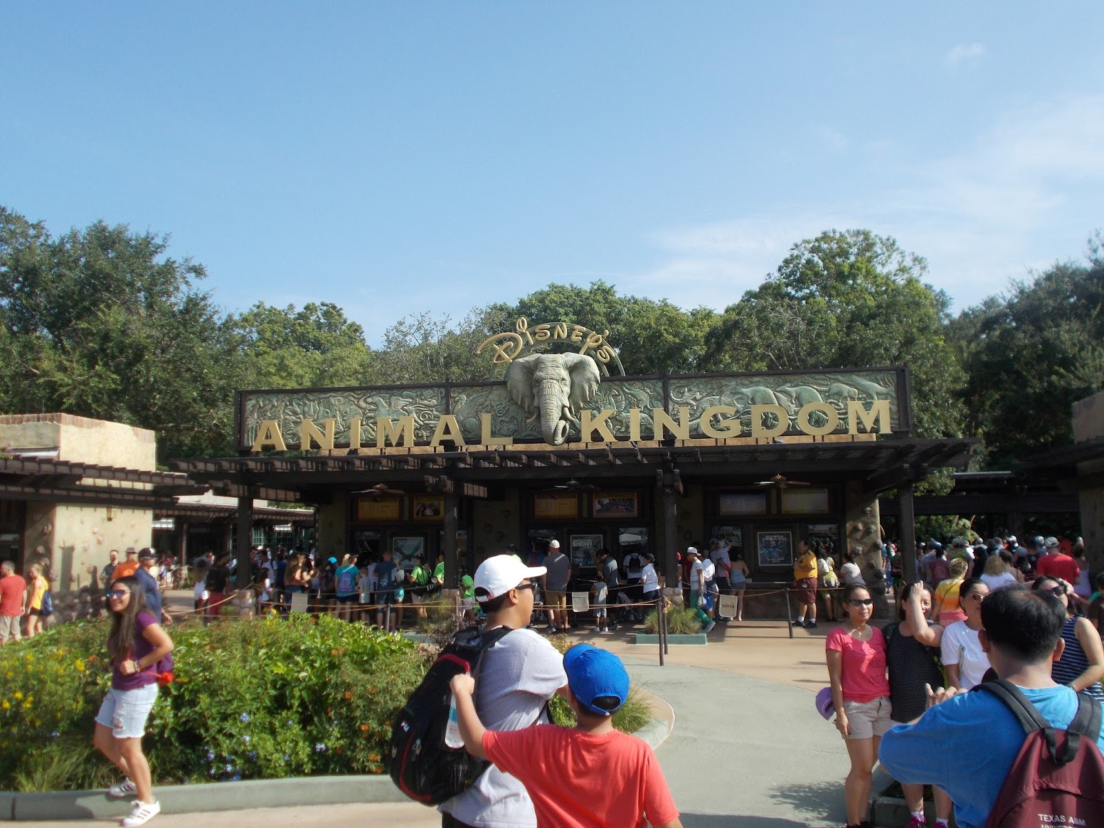 Animal Kingdom Buses Run Late For Rainforest Cafe