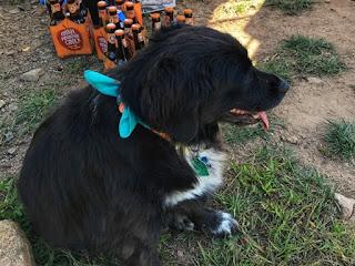 Farm dog at Cobbler Mountain Cellars