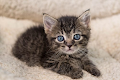 Be Careful! Bad Effects of Too Early in Weaning Kittens