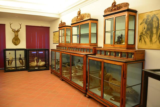 MUSEO-SCIENZE-NATURALI-PAOLUCCI-OFFAGNA