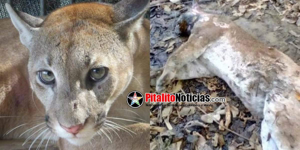 ddb3c2e08355 La falta de educación e información sobre la protección del medio ambiente  en Córdoba