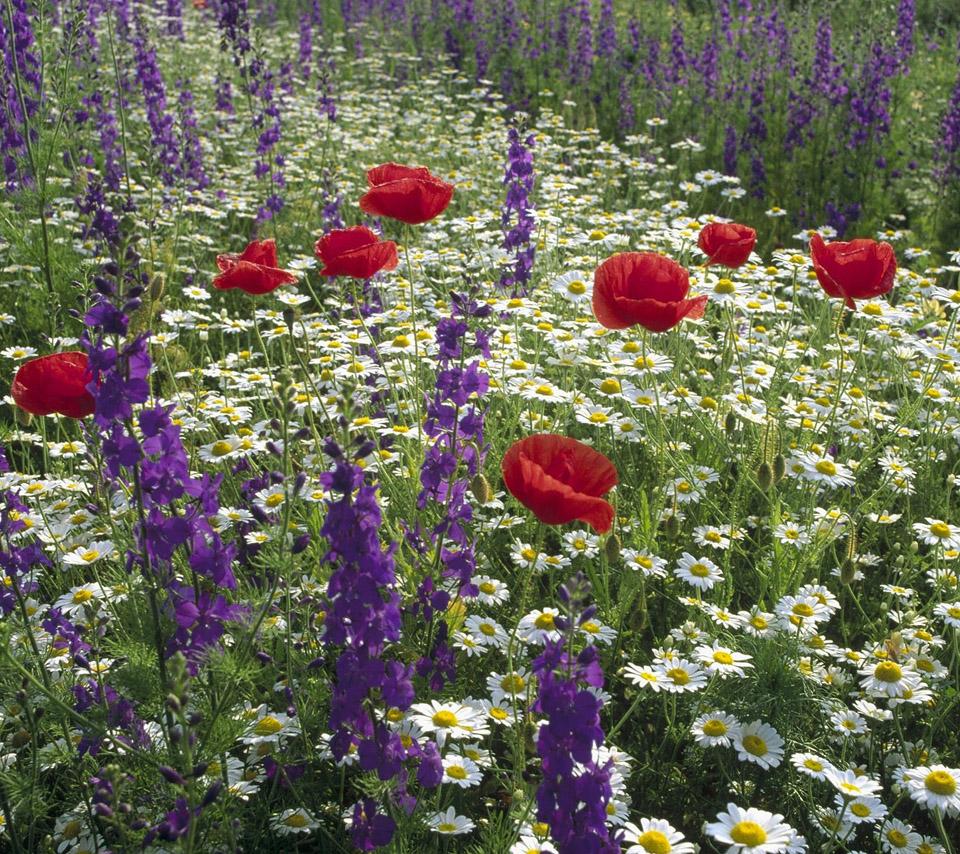 Beautiful Flower For Wallpaper: Flowers For Flower Lovers.: February 2013