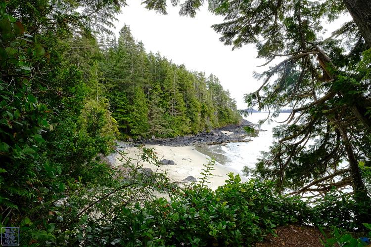 Le Chameau Bleu - Blog Voyage Torino Ile de Vancouver -  Balade sur les plages de Tofino