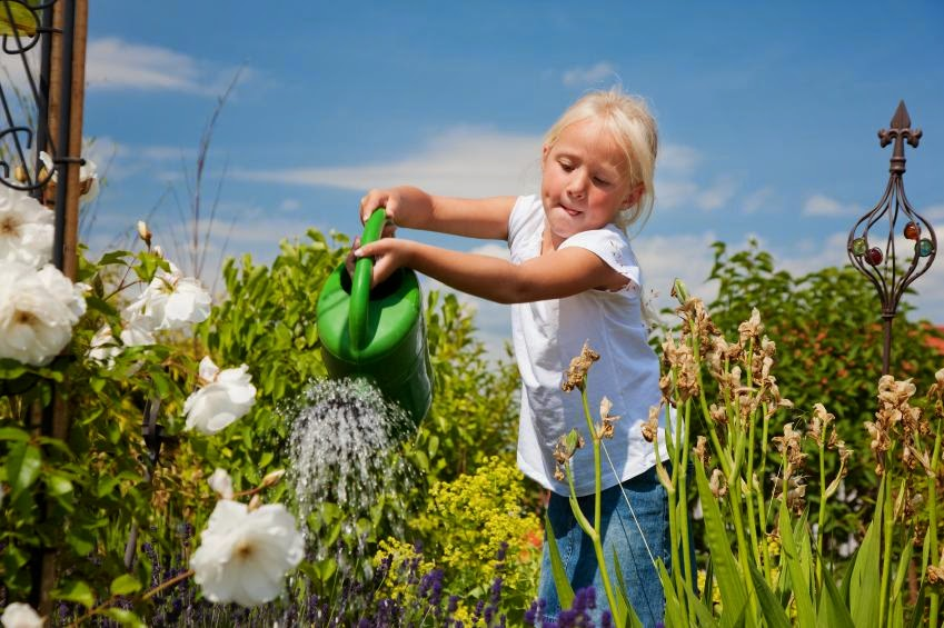 every day is special may 30 � water a flower day