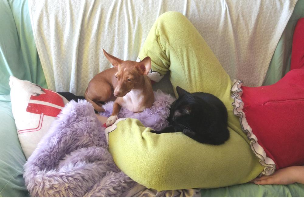 https://www.blogueelaeele.com/2016/06/temos-o-gato-da-whiskas-em-casa.html