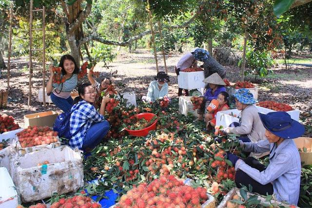 Vườn Trái Cây Lái Thiêu – Thuận An