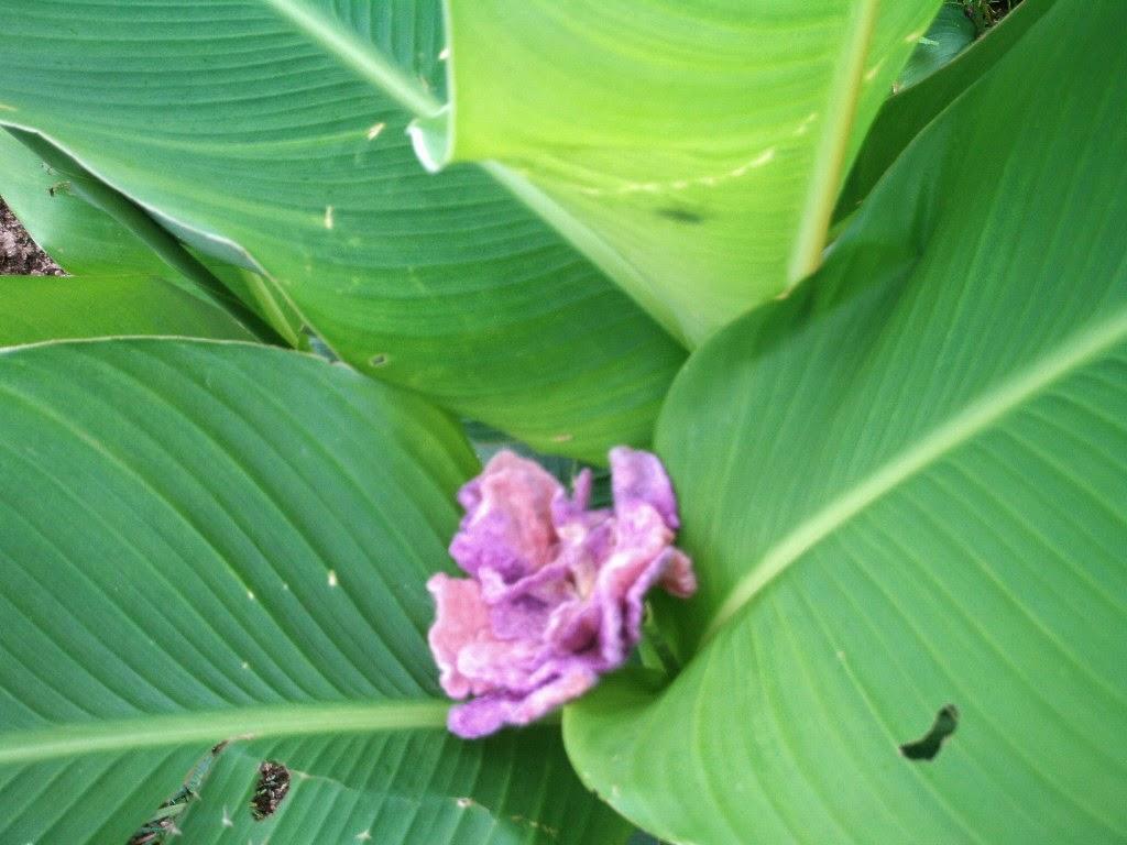 flor feltrada rosa e lilas no meio de folhas de taioba