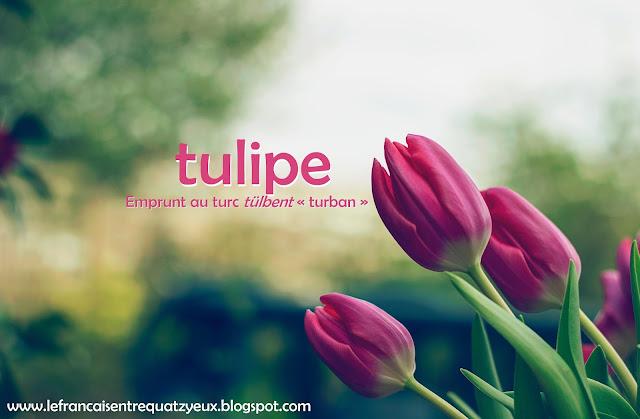 la fleur la tulipe le tournesol le pissenlit
