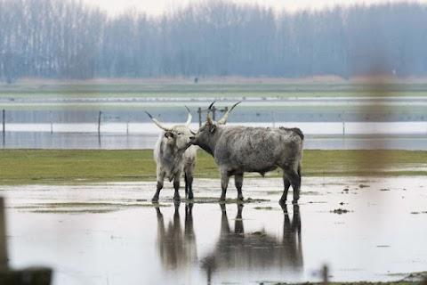 A víz három drámája is téma lesz a budapesti Víz-világtalálkozón