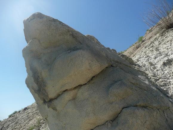 Олексієво-Дружківка. Скам'янілі дерева