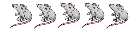 5 cute cartoon rats