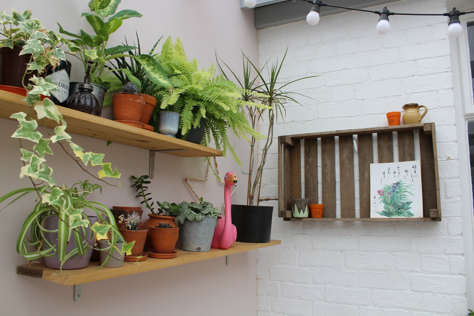 Pallet shelves with plants
