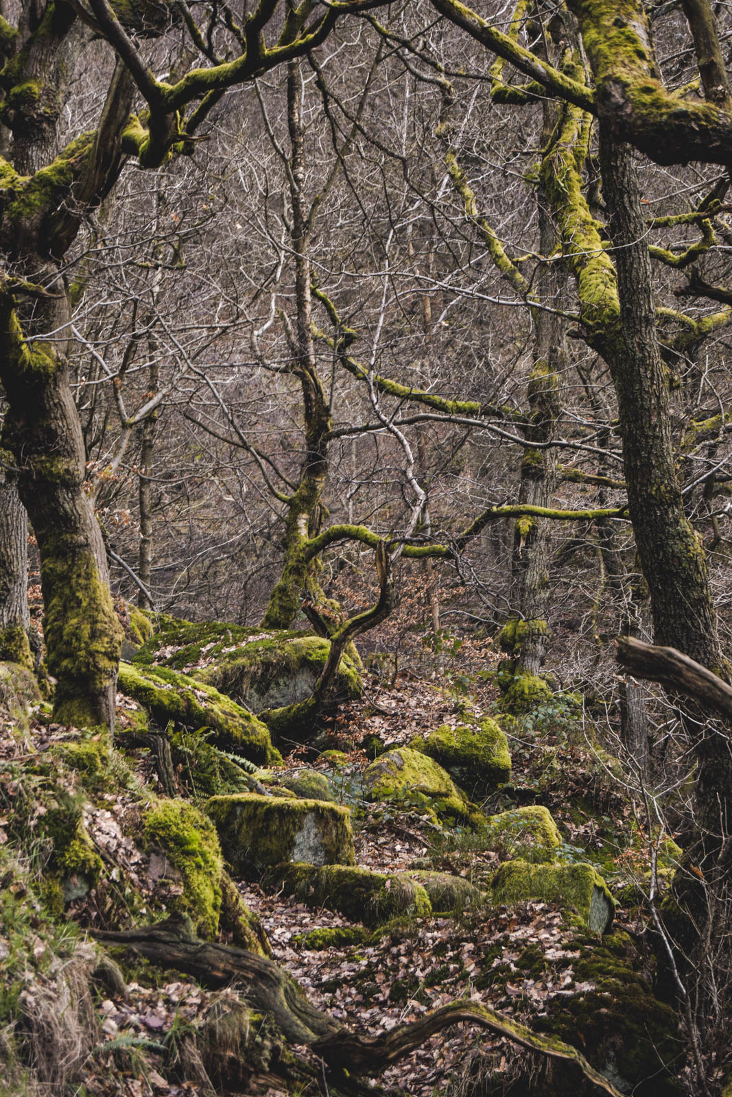 twisted trees in the peak district