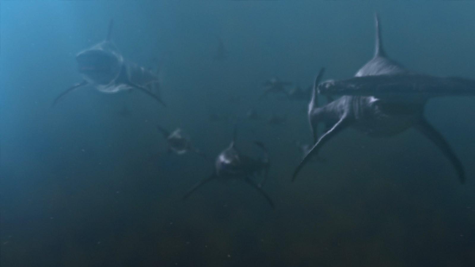 Planet Of The Sharks Christia Visser