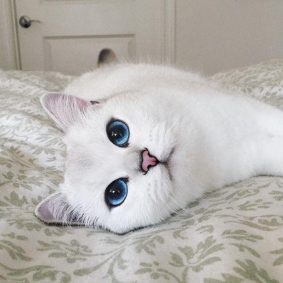 delineado gatinho