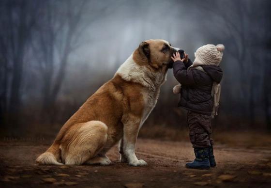 Lí do thú cưng thích được vuốt ve