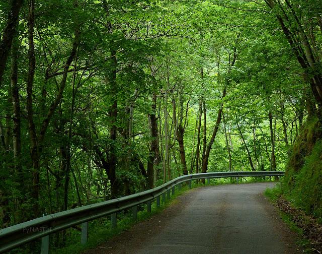 Carretera de Abiegos a Sobrefoz - Ponga - Asturias