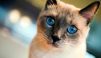 Hastanede Kedi Pisliği Ege Üniversitesi Hastanesi Çocuk Bölümünde Kedi Kakası Görüntüleri