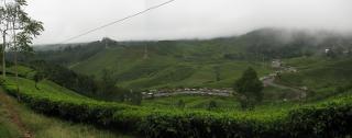 Tempat wisata di Puncak didominasi oleh wisata alam. Dari sejumlah tujuan di Puncak, Gunung Gede Pangrango dan Kebun Raya Cibodas menjadi favorit objek wisata bagi wisatawan yang sering banyak di kunjungi di wilayah ini. Tapi bagi anda yang tidak suka pergi ke gunung, jangan khawatir karena ada banyak tempat wisata di Puncak yang dapat dicapai dengan mobil