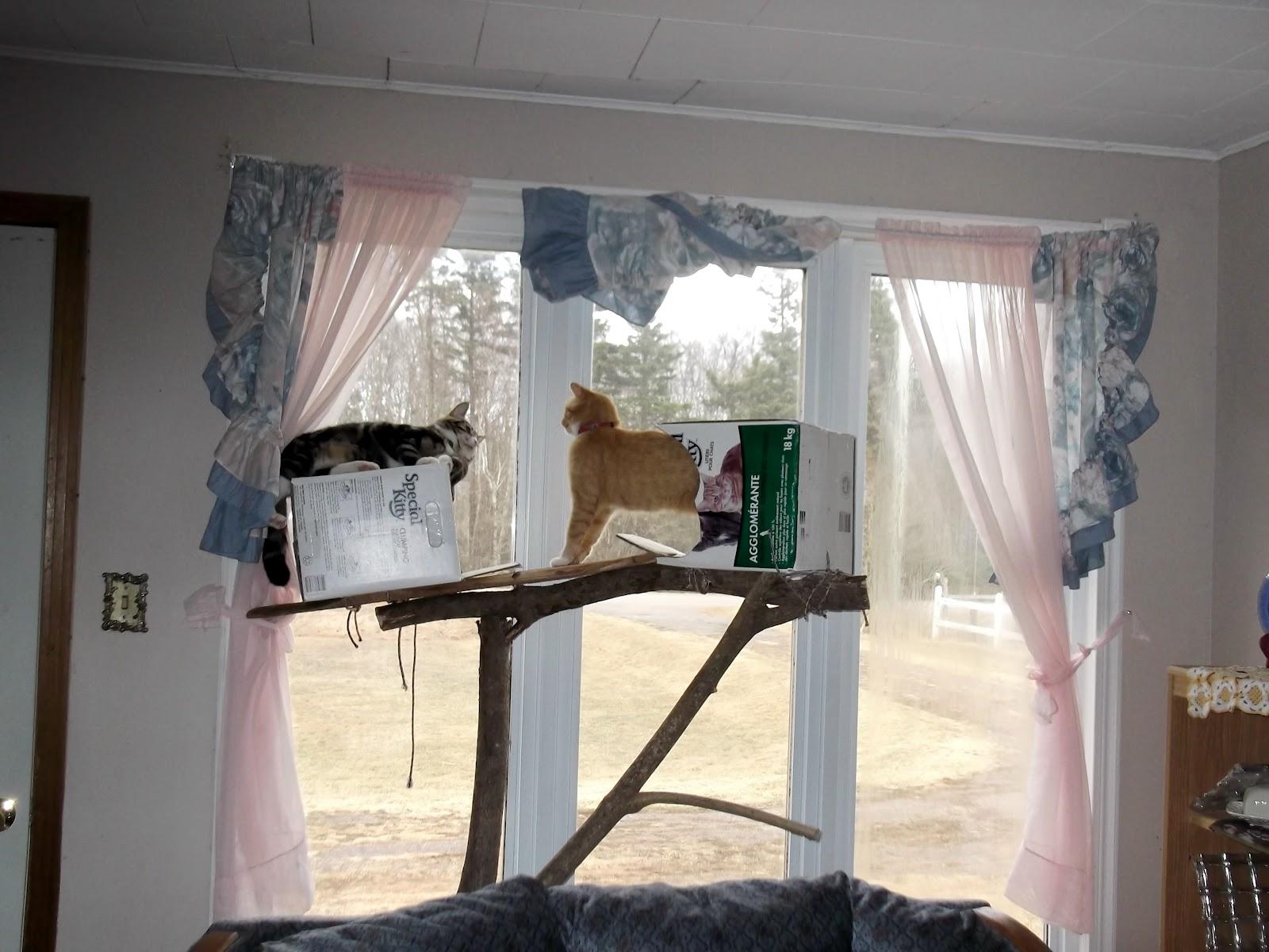 woodwork homemade cat tree plans pdf plans. Black Bedroom Furniture Sets. Home Design Ideas