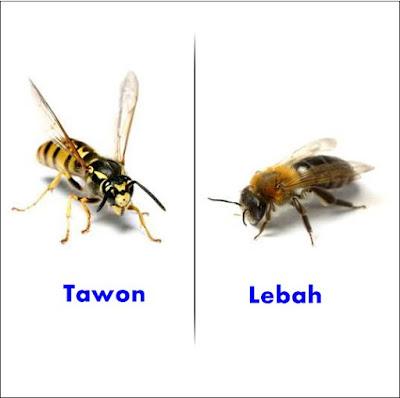 Sengatan lebah sanggup menjadikan iritasi Cara Membunuh & Mengusir Tawon Di Rumah Anda
