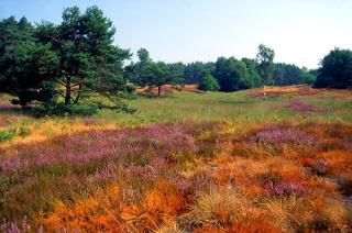 Paisaje Parque Natural Schwalm-Nette