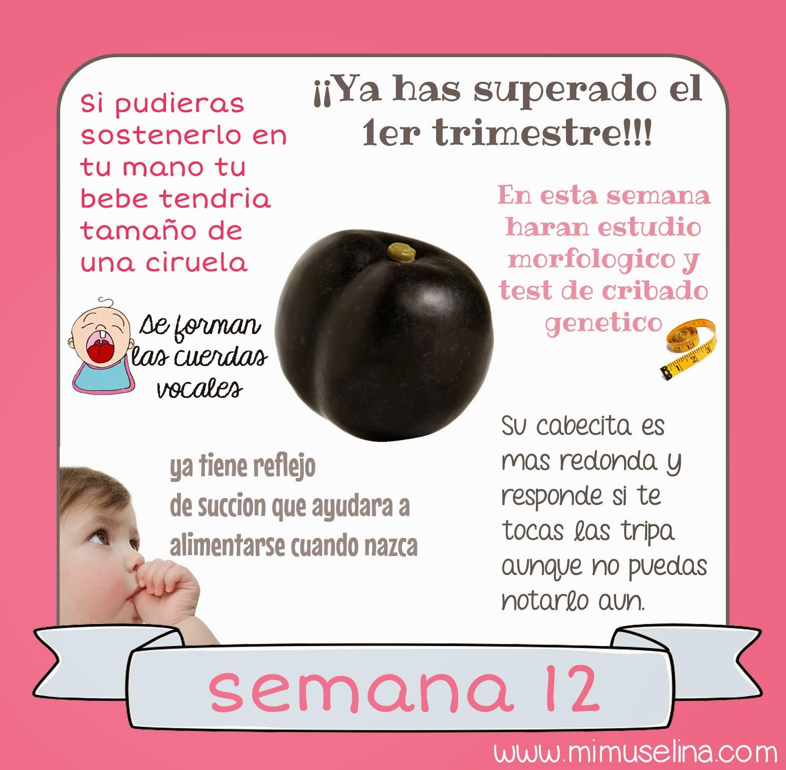 Bebeblog by mimuselina semana 12 embarazo tama o y - El baul de tu bebe ...