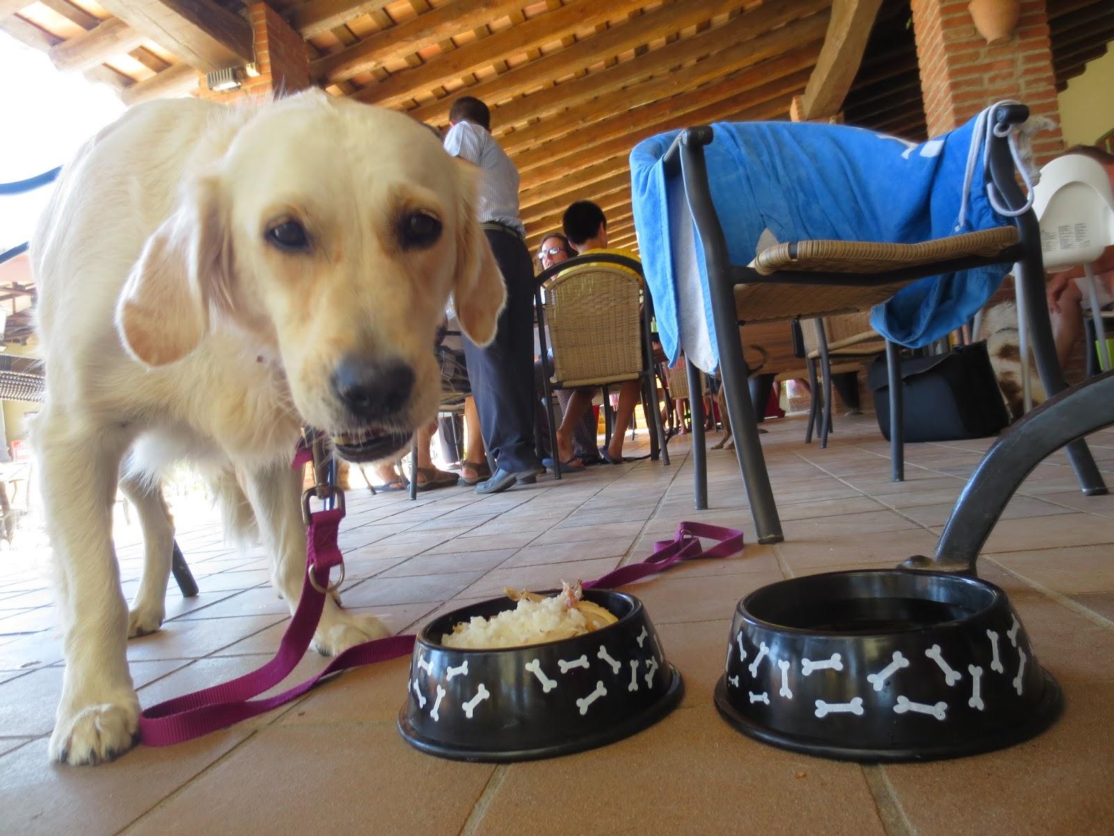 Sortir amb nens i gossos - Perrera de vilafranca ...