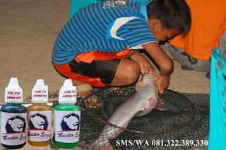 Essen Untuk Umpan Ikan Patin Galatama