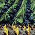 واشنطن بوست: سيناريو اميركي لتوجيه ضربة عسكرية لـ «حزب الله»