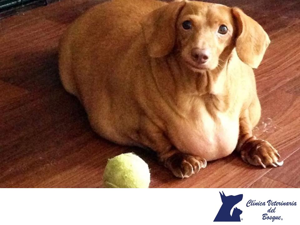 Como bajo de peso a mi perra