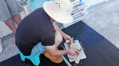 www.pescaturismomallorca.com El secreto del mejor arroz marinero está en los ingredientes