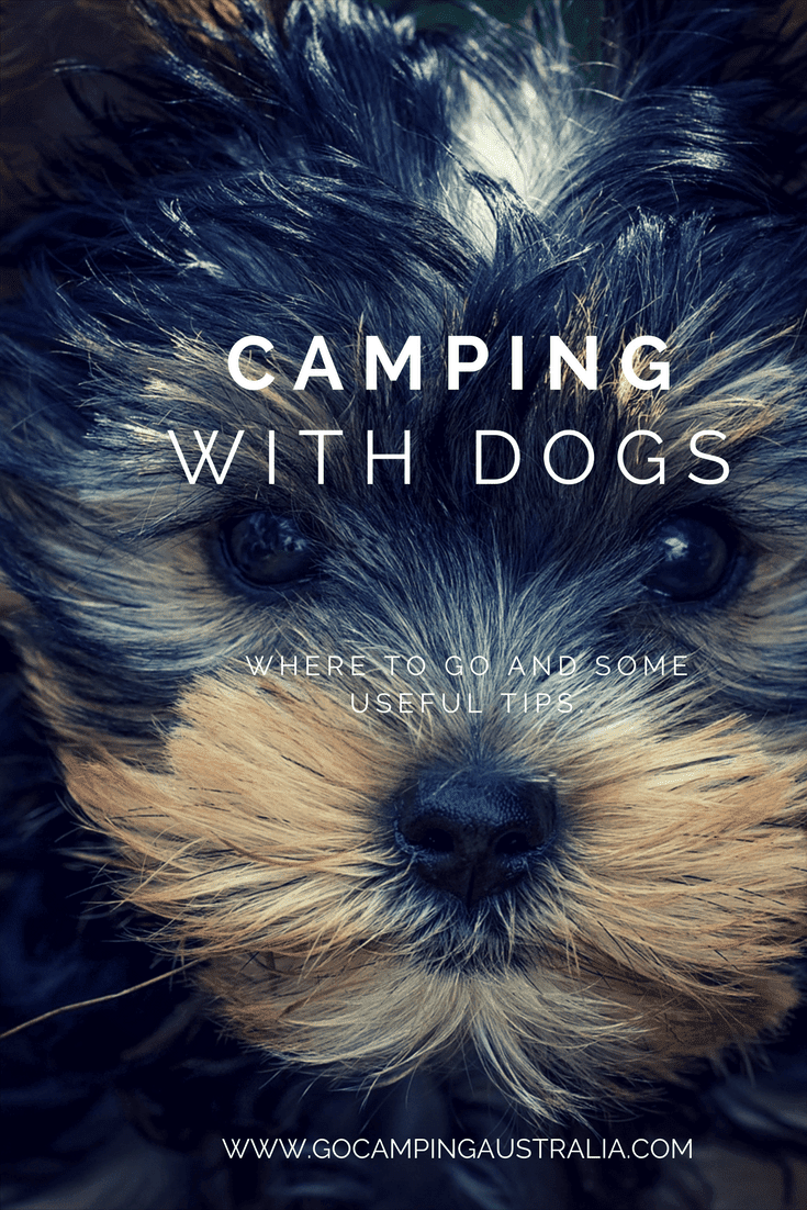 Where To Go Camping With Dogs Go Camping Australia Blog