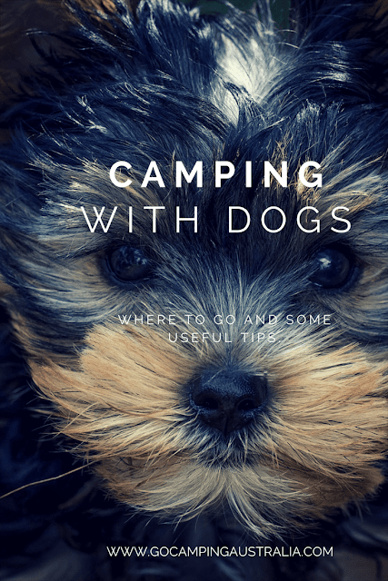 Camping with Dogs in Australia - tips and where to go