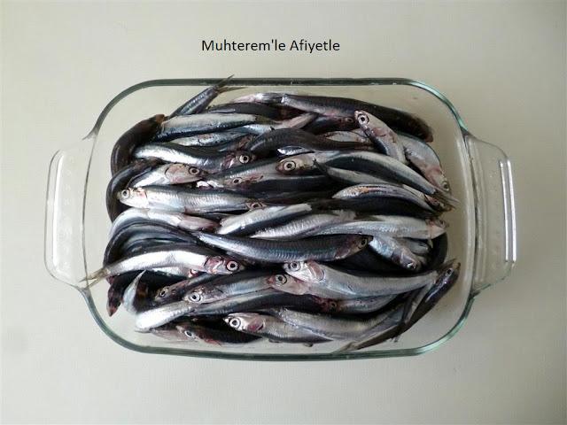 hamsi balığı resmi