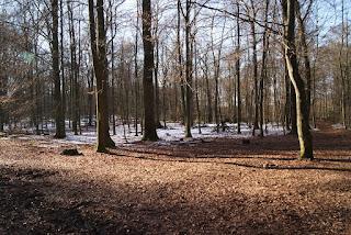 Eine Lichtung im Wald, Auf der Lichtung liegt schnee, rings herum nicht mehr.