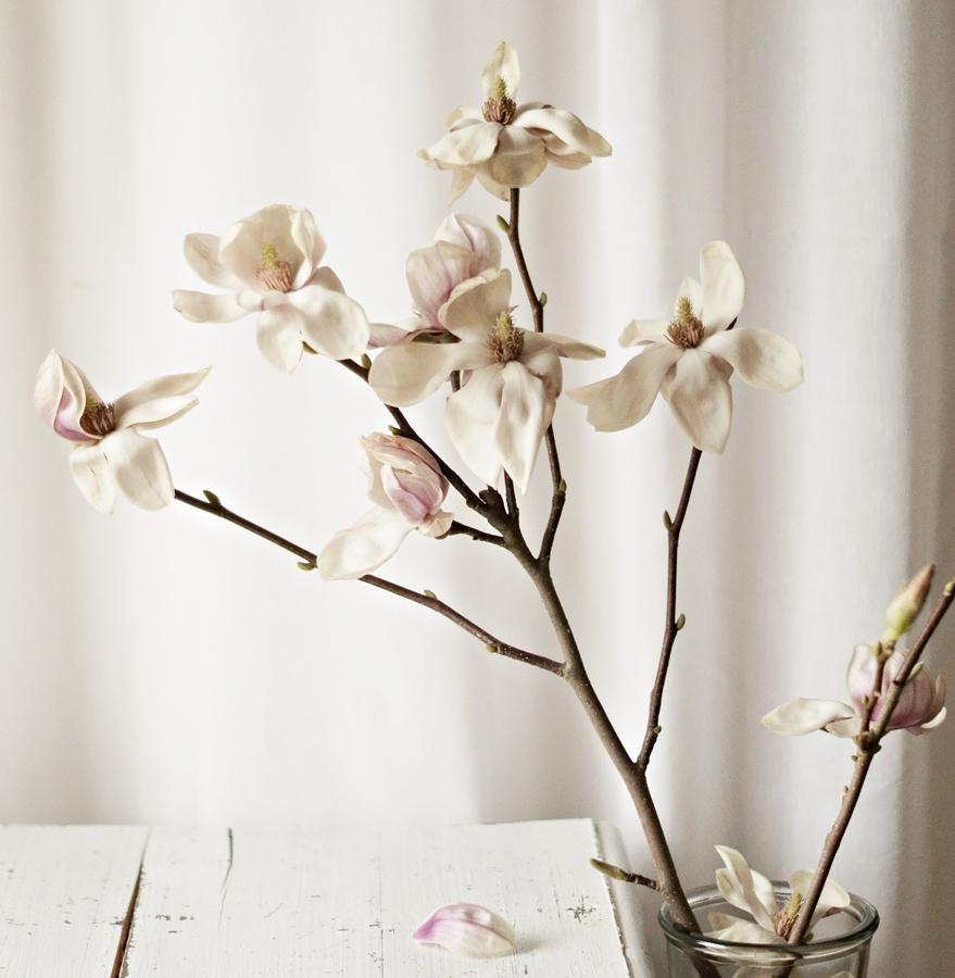 aufgeblühte Magnolie und eine weiße Tischplatte