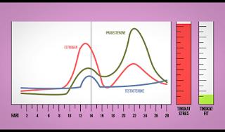 Grafik Mood, Kondisi Tubuh, Hormon cewek dan wanita saat pms