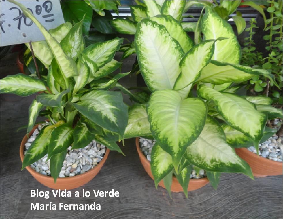 Plantas de interior nombres for Fotos de plantas de interior