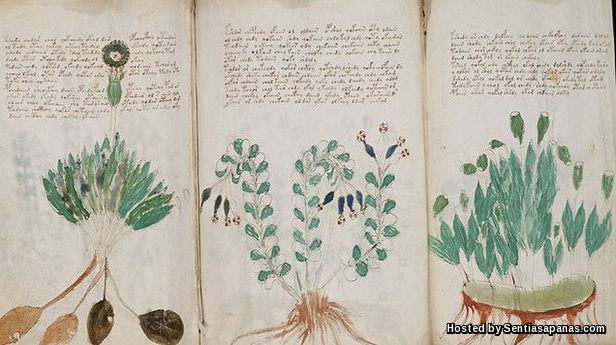 Manuskrip Voynich [3]