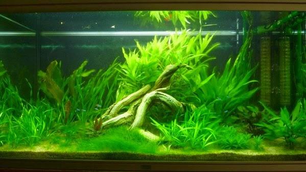 éviter pique de nitrite aquarium