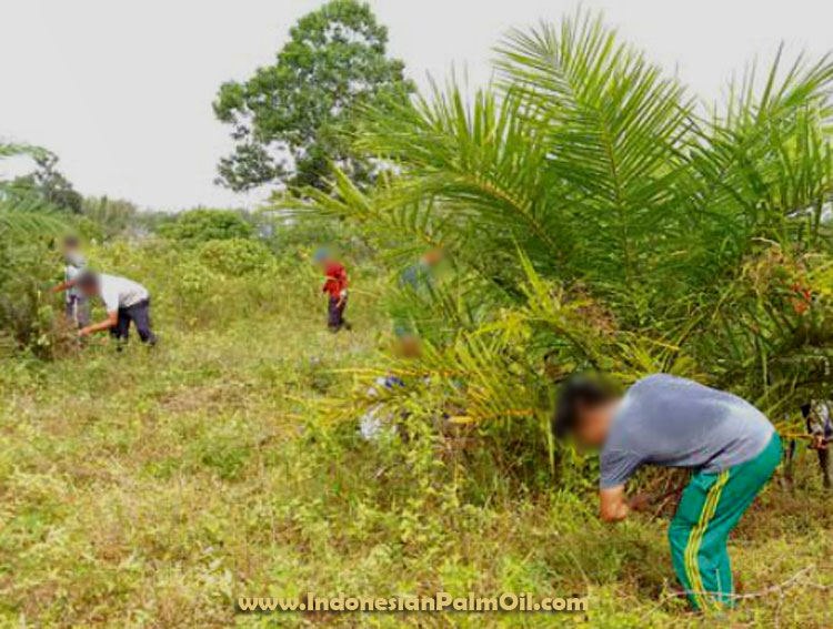 Indonesia palm oil permit moratorium